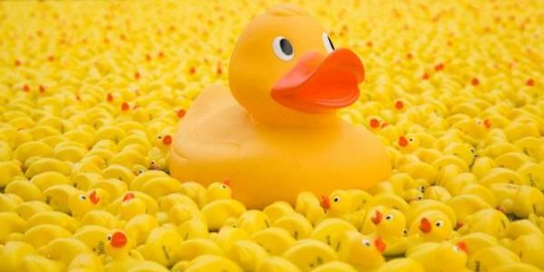 duck-race-600x300